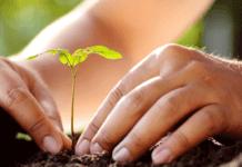 Fabriquer un engrais naturel pour les plantes