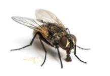 4 astuces pour lutter contre les mouches en été