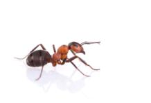 5 astuces pour se débarrasser des fourmis