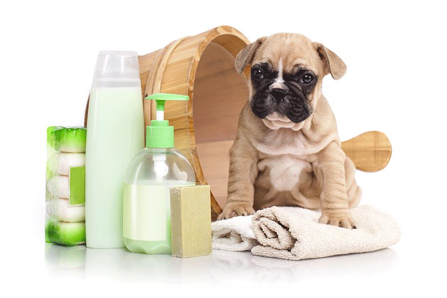 7 astuces pour faire partir les puces de chien