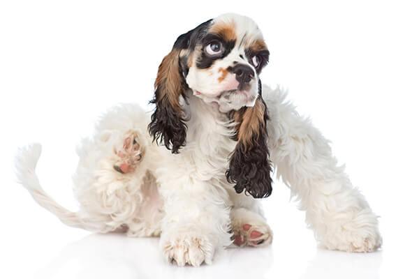 Astuces anti puces de chats et chiens