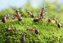 Détruire une fourmilière