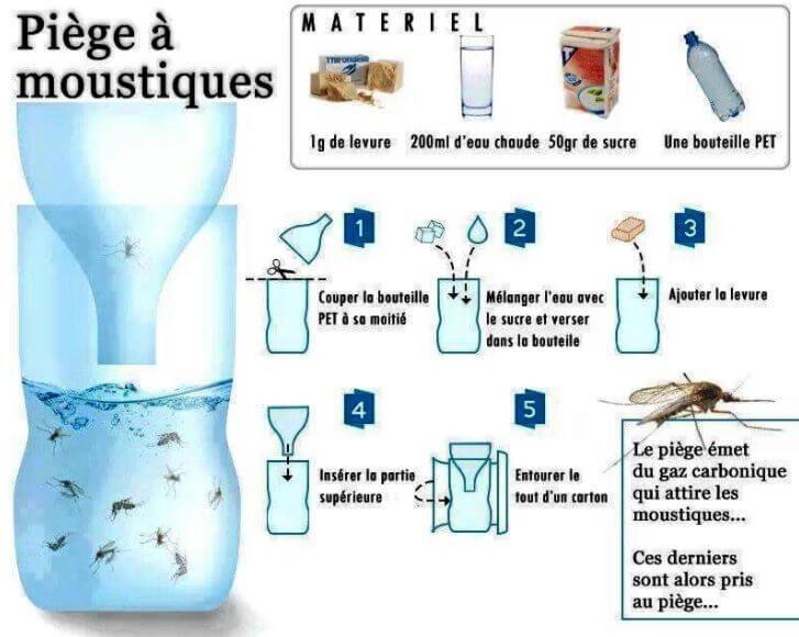 piège à moustiques et mouches