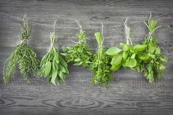 conserver les herbes aromatiques