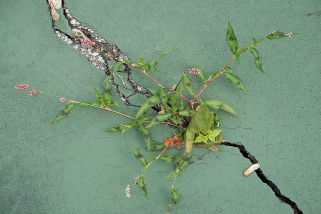 Astuces pour enlever les mauvaises herbes grands - Comment tuer les mauvaises herbes ...