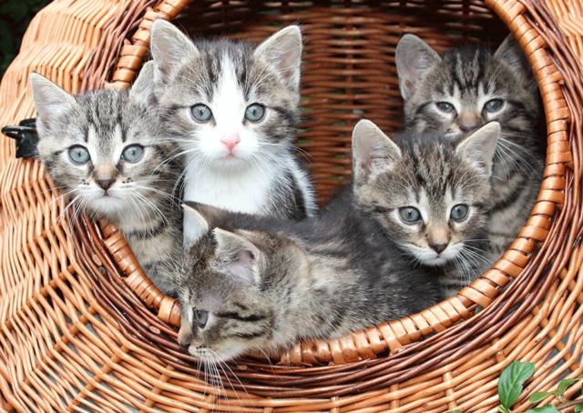 """Résultat de recherche d'images pour """"image de chaton"""""""