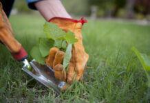 enlever les mauvaises herbes