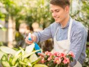fabriquer un insecticide naturel pour les plantes