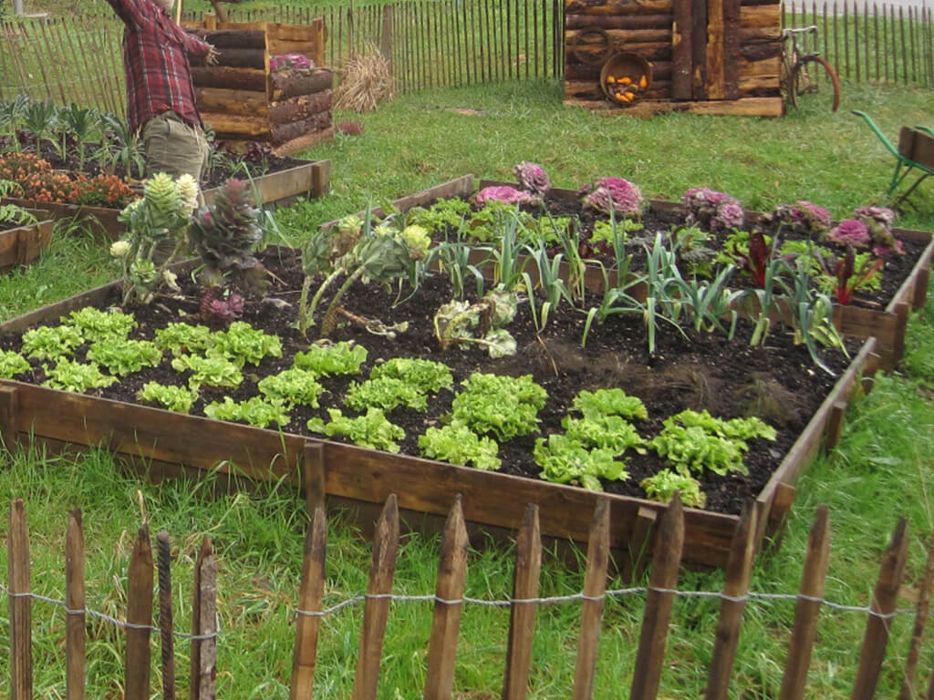 Les diff rentes astuces pour son jardin potager grands - Culture des endives au jardin ...