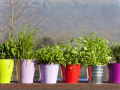 faire un engrais naturel pour plantes vertes grands. Black Bedroom Furniture Sets. Home Design Ideas
