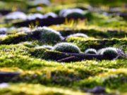 astuces naturelles contre la mousse au jardin