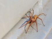 répulsifs pour araignées