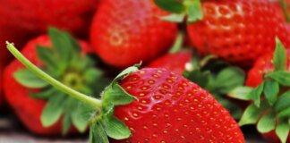 conservation des fraises