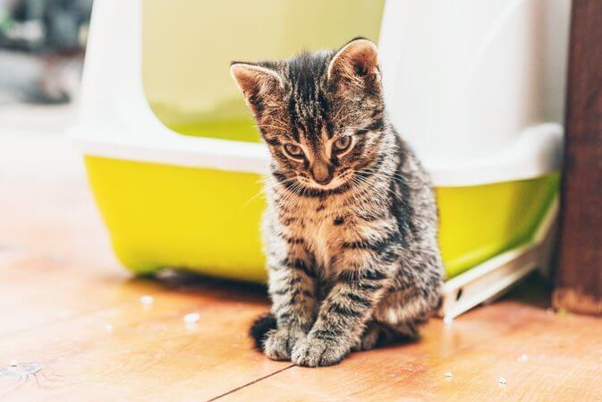 Enlever l'odeur de pipi de chat