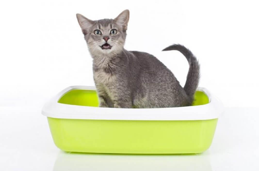 Enlever l'odeur de pipi de chat astuces