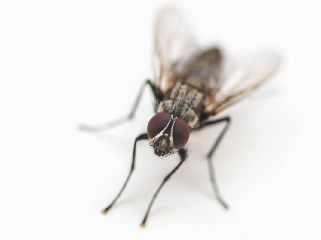 enlever les taches de mouche