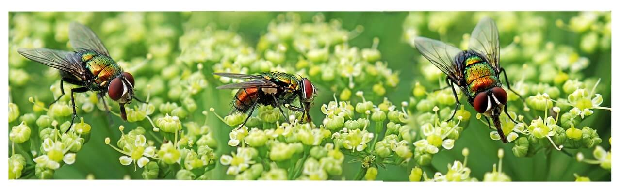 enlever une tache de mouche