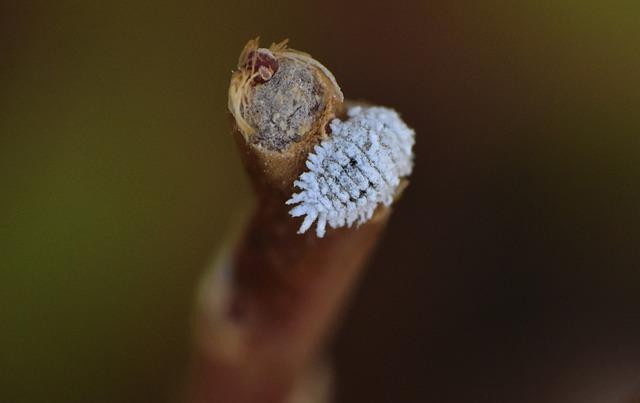 comment se débarrasser des cochenilles
