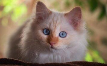 bienfaits du chat